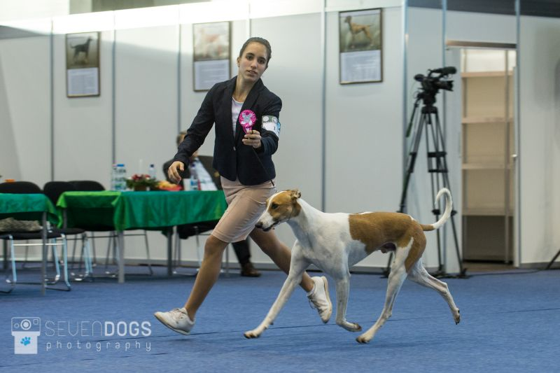 Junior Handler gála