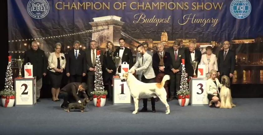 2017. Champion of Champions és Magyar Nemzeti kutyafajták speciál CAC kiállítás videói